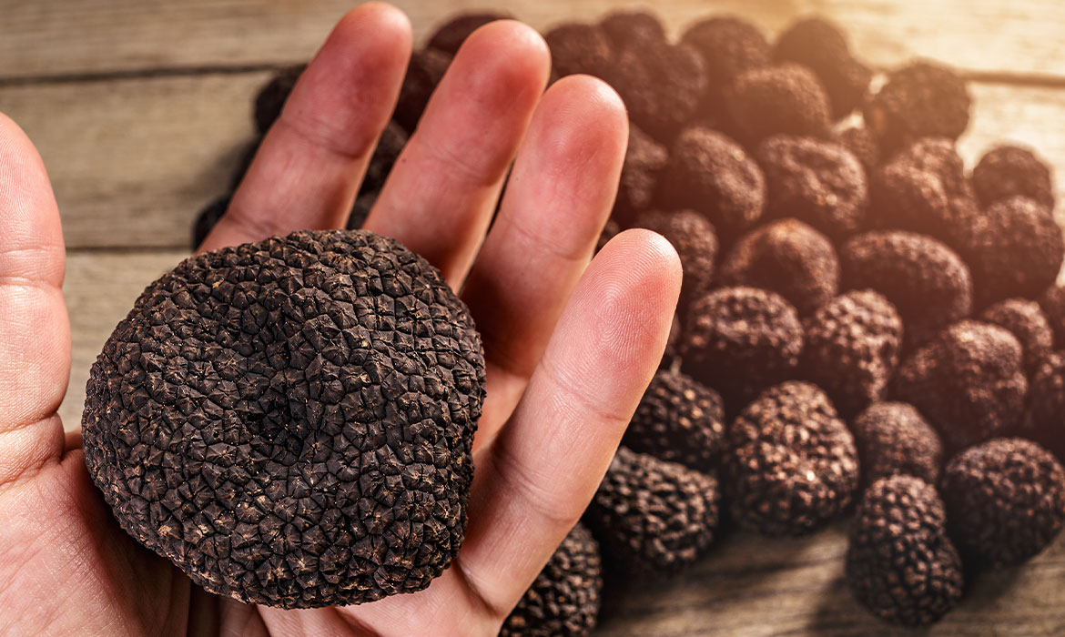 Fresh black truffles harvested to order