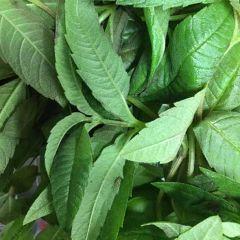 Fresh Lemon Verbena Micro