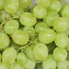 Fresh Green Seedless Grapes