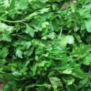 Fresh French Flat Parsley