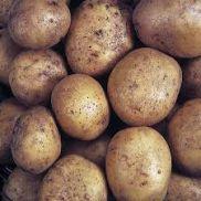 Fresh Potato Maris Piper