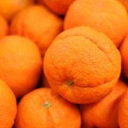 Fresh Oranges Seville Bitter