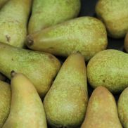 Fresh Conference Pears