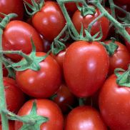Fresh Tomatoes Italian Picadily