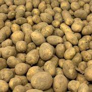 Fresh Jersey Royal Mids Potatoes