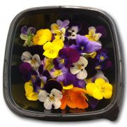 Fresh Viola Flowers (Mixed Colour)