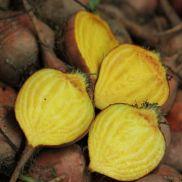 Fresh Beetroot Golden