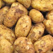 Fresh Potato Cyprus