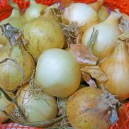 Fresh Pickling Onions