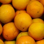 Fresh Oranges Small (Juicing)
