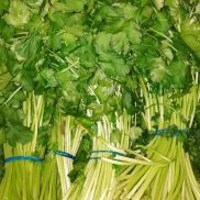Fresh Coriander Bunched