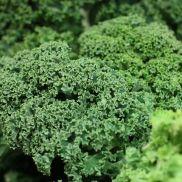 Fresh Kale Loose