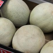 Fresh Cantaloupe Melon