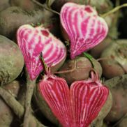 Fresh Beetroot Candy